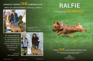 Ralfie Ad Arista Australian Terriers