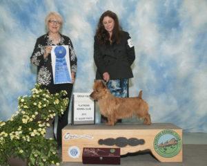 Ralfie and Pamela Group1 Owner Handled National Specialty Weekend Arista Australian Terriers
