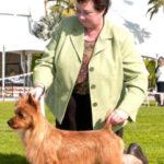 gch-ryba-nothing-but-blue-skies-owner-pamela-levy_Australian_Terrier_Puppies