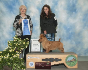 Ralfie and Pamela Group1 Owner Handled National Specialty Weekend Arista Australian Terriers